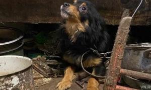 Концлагерь для собак и кошек обнаружили защитники животных в Евсино