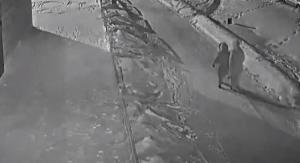 Вандалов, срубивших елочку в микрорайоне Ложок, заставят восстановить зеленые насаждения