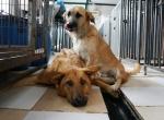 Новосибирская область готова запустить пилотный проект по созданию приютов для животных