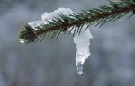 Потепление до 0 градусов ждет искитимцев  в длинные выходные