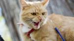 От бешенства умер кот в деревне Бурмистрово