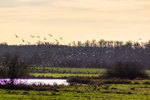 С 23 апреля в Искитимском районе открывается весенний сезон охоты на птицу