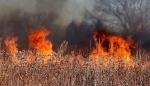 Более сорока палов травы потушили пожарные в Искитиме и Искитимском районе на прошлой неделе