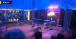 Под Новосибирском в цирке-шапито львица напала на дрессировщика