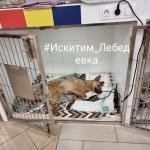 Собак в вольере расстрелял неизвестный в селе Лебедевка
