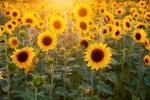 Экстремальная жара до +35 градусов ожидается в Новосибирске с 1 июля
