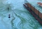 Загрязнение реки Бердь нефтепродуктами подтвердили эксперты
