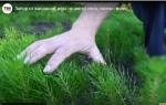 Питомник тальменской школы огородили от вандалов и любителей выкапывать саженцы