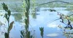 Жители Искитима обеспокоены состоянием воды в Берди