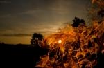За прошедшую неделю в Искитимском районе произошло пять пожаров