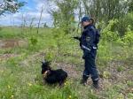Шесть человек потерялись в лесах Новосибирской области с начала июля