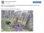 Молодой медведь напугал жителей села Легостаево
