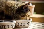 Возле Искитима построят фабрику по производству кошачьего корма