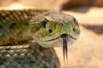 Новые места обитания ядовитых змей нашли в Новосибирской области