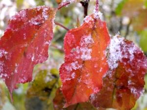 Мокрый снег обещают синоптики Искитиму