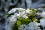 Снегопад и гололёд: экстремальное предупреждение объявили в Новосибирской области из-за непогоды