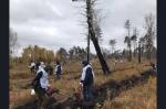 5 тысяч молодых лиственниц посадили на месте лесного пожара в Искитимском районе